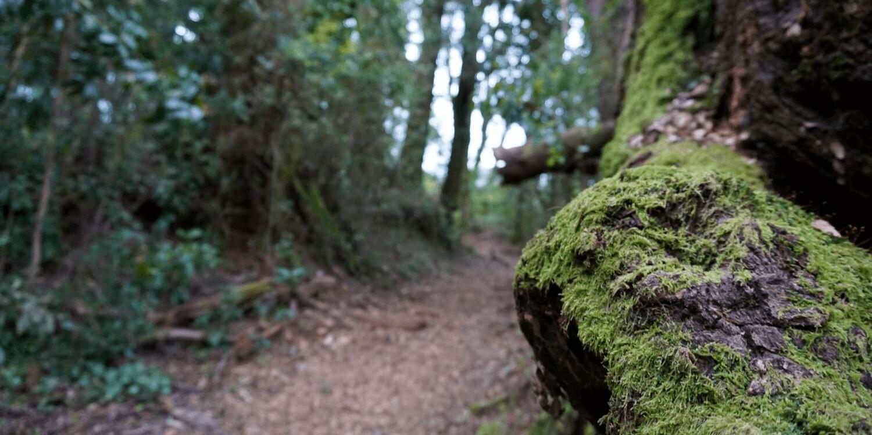 Arboretum en Valdivia - Bichito Viajero